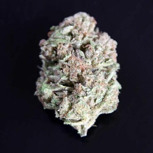 Cherry Chem Bud