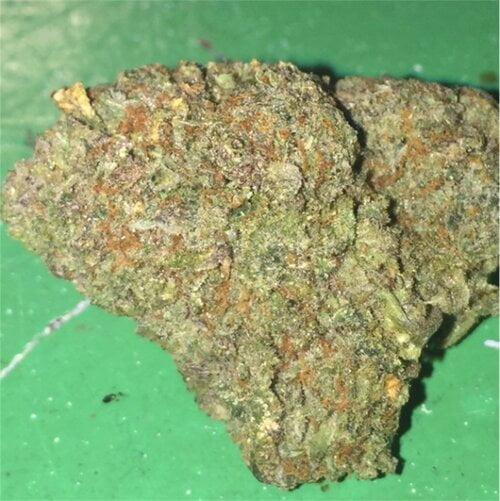 Diablo Strain Marijuana Plant
