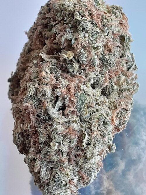 Godfather OG Strain Marijuana Plant